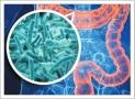 microbiote-internet-CHU-Liege-belgique - Copie