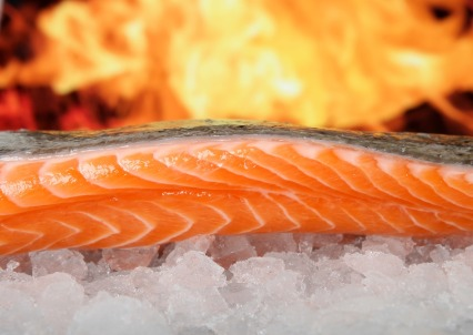 salmon-1238662_1920 - Copie