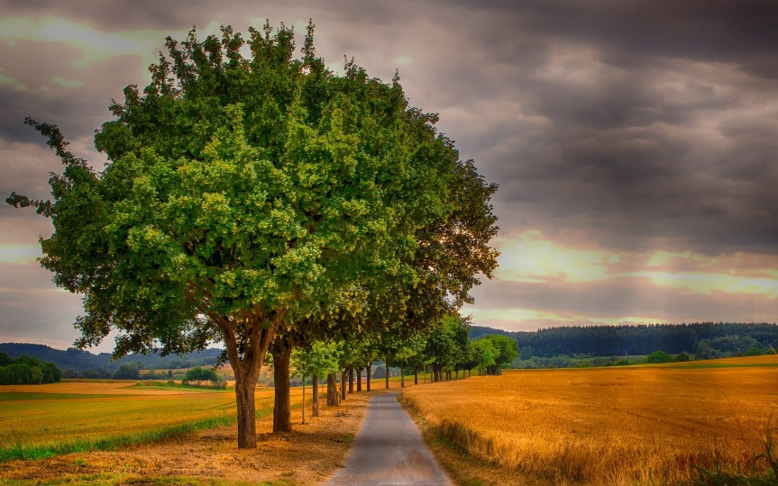 Gluten: l'arbre peut cacher la forêt!